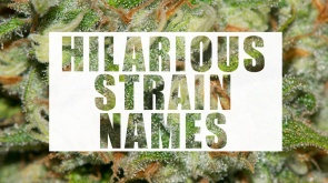 hilarious-strain-names-puget-sound-marijuana-cover